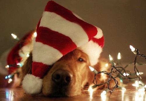 Jak rozplątać świąteczne lampki?
